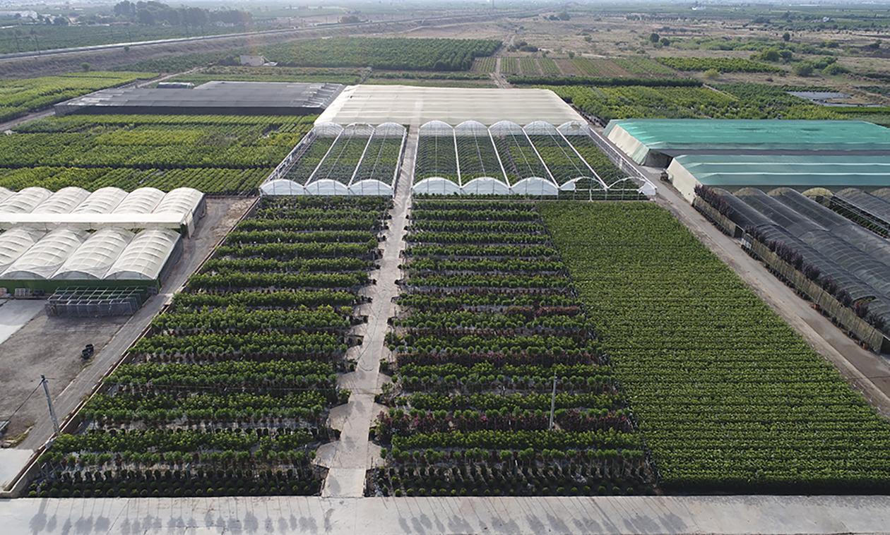 fepex-exportacion-plantaviva