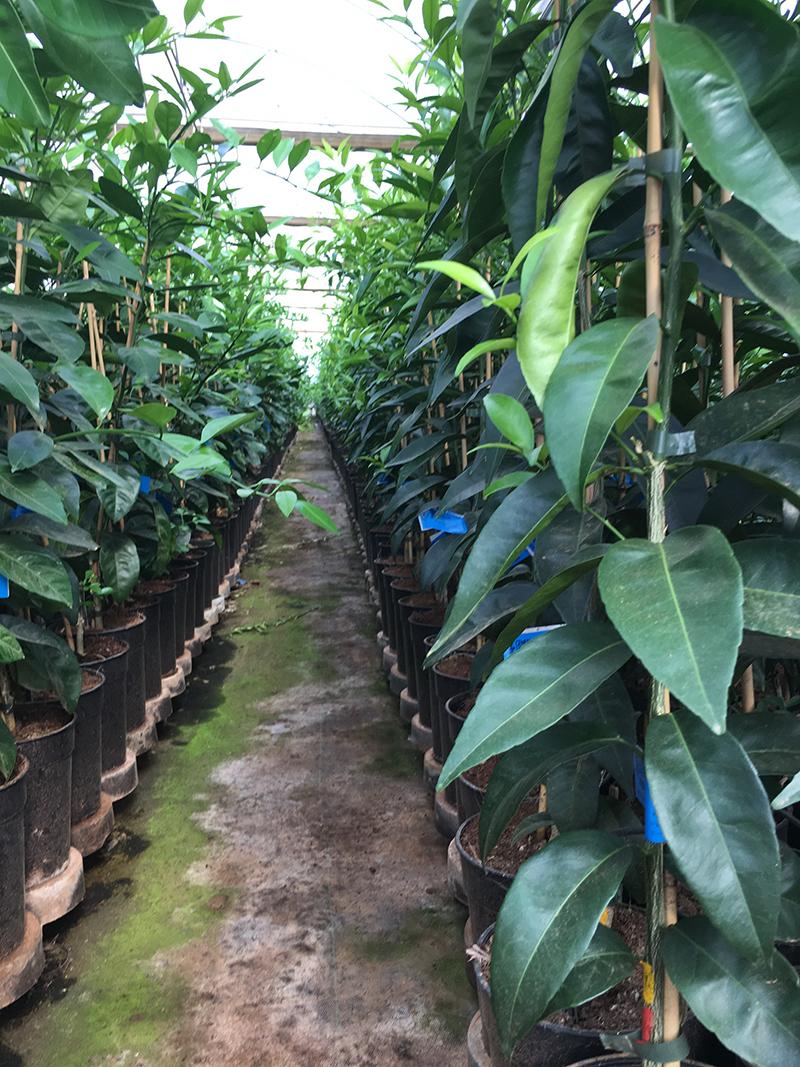 interior plantones naranjos